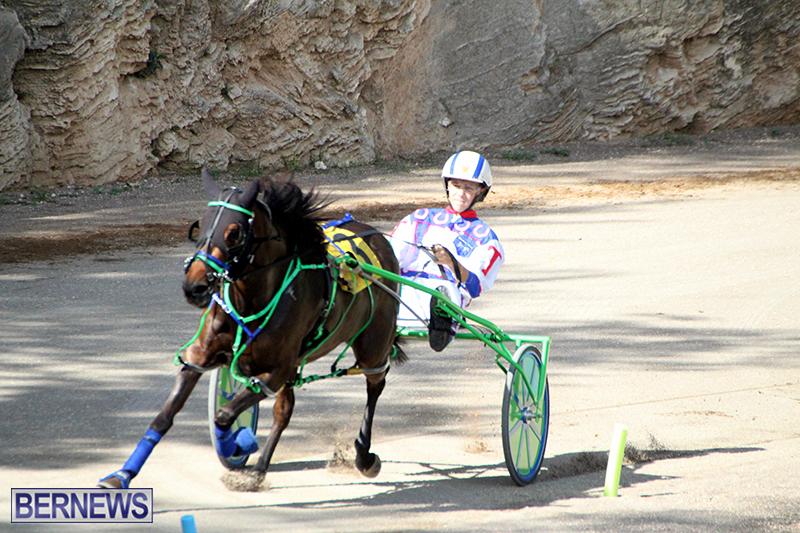 Harness-Pony-Bermuda-Nov-14-2018-3