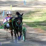 Harness Pony Bermuda Nov 14 2018 (4)