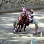 Harness Pony Bermuda Nov 14 2018 (6)