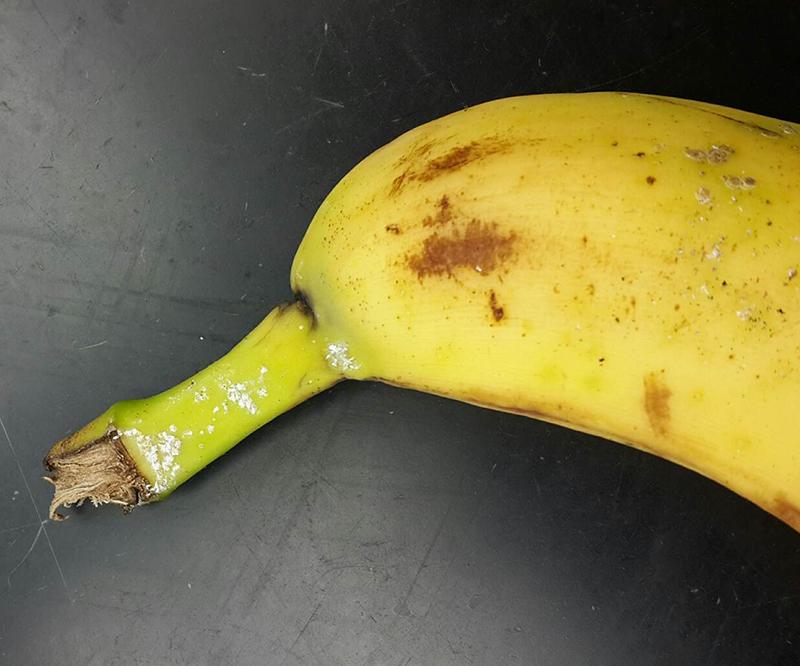 banana Bermuda Nov 14 2018 (2)