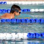 swimming Bermuda Nov 14 2018 (15)