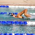 swimming Bermuda Nov 14 2018 (19)