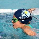 swimming Bermuda Nov 14 2018 (3)