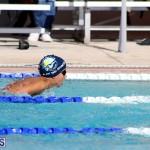 swimming Bermuda Nov 14 2018 (7)