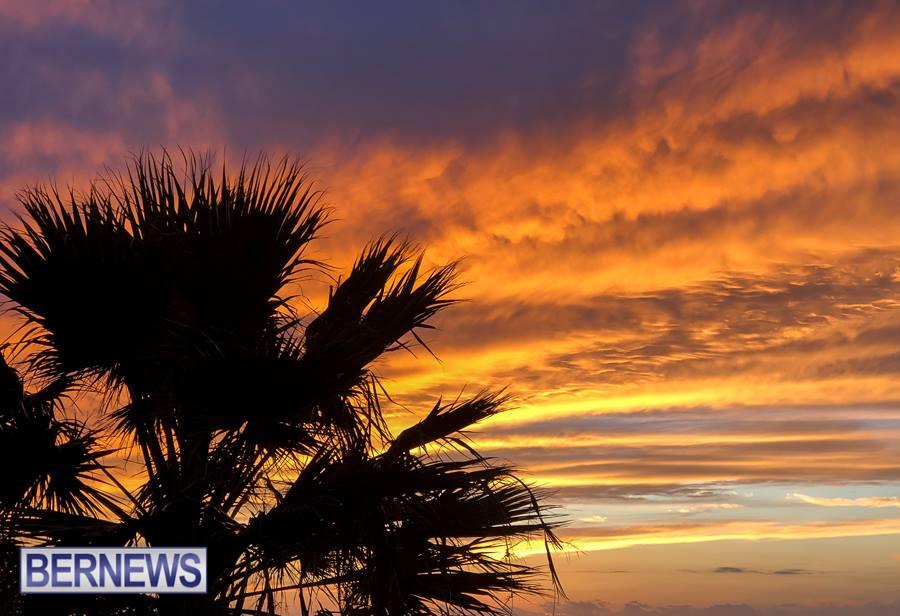 120 Palm tree leaves Generic Jan 2019