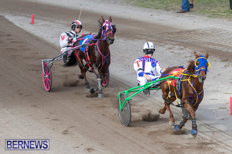 Harness-Pony-Racing-Bermuda-January-1-2019-6623
