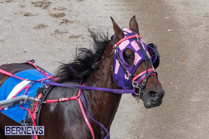 Harness-Pony-Racing-Bermuda-January-1-2019-6625