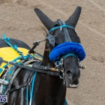 Harness Pony Racing Bermuda, January 1 2019-6674