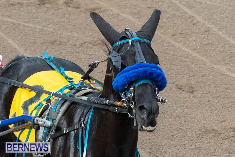 Harness-Pony-Racing-Bermuda-January-1-2019-6674