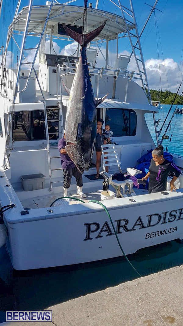 Paradise One Bluefin Tuna Bermuda, January 12 2019-50-2
