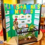Purvis Primary Science Fair Bermuda, February 21 2019-9310
