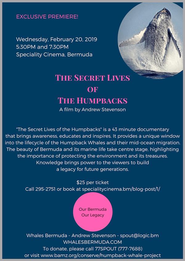 The Secret Lives of the Humpbacks Bermuda Feb 2019