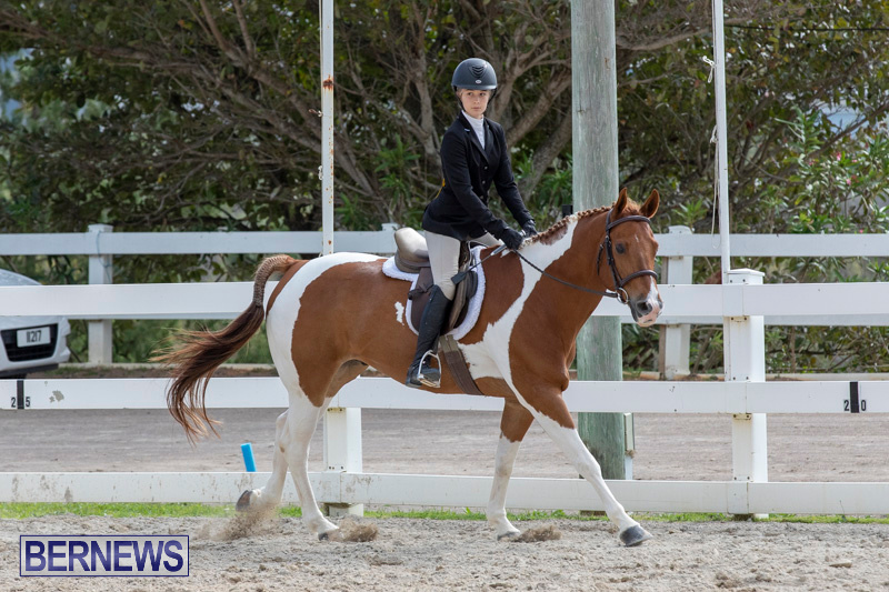 BHPA-Bermuda-Horse-Pony-Association-Spring-Show-March-24-2019-6259