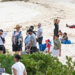 The Great Bermuda Penguin Swim, March 3 2019-1640