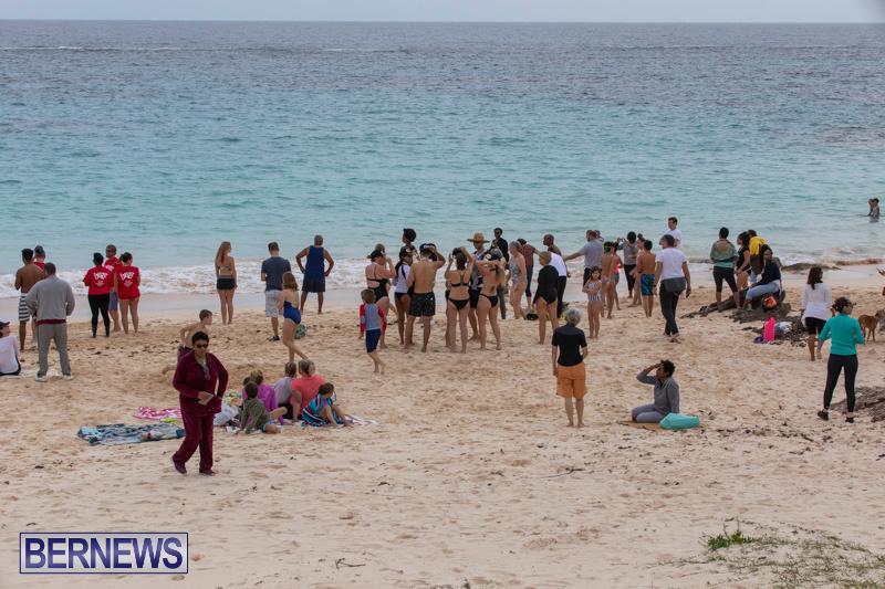 The-Great-Bermuda-Penguin-Swim-March-3-2019-1797