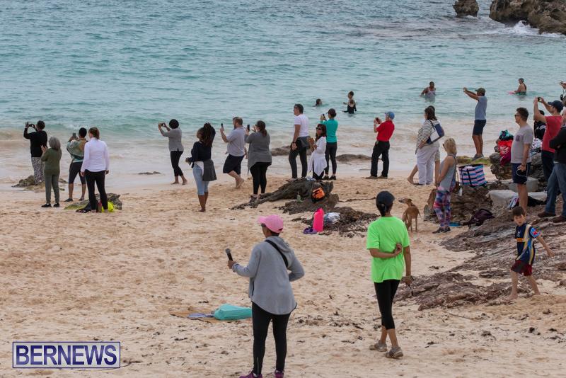The-Great-Bermuda-Penguin-Swim-March-3-2019-1818