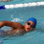 swimming Bermuda March 27 2019 (11)