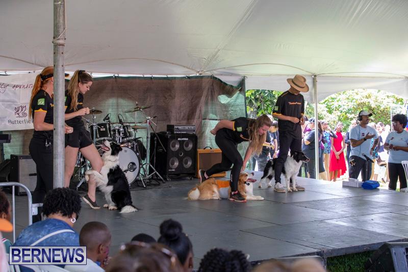 Ag-Show-At-Botanical-Gardens-Bermuda-April-13-2019-0500