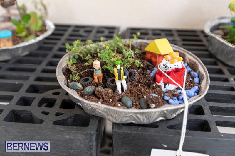 Ag-Show-Plants-Bermuda-April-10-2019-9364