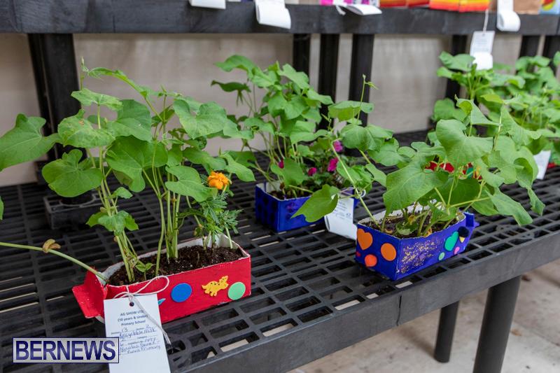 Ag-Show-Plants-Bermuda-April-10-2019-9372