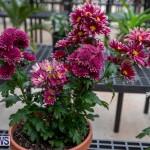 Ag Show Plants Bermuda, April 10 2019-9378