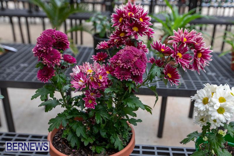 Ag-Show-Plants-Bermuda-April-10-2019-9378