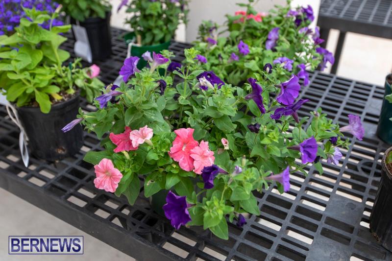 Ag-Show-Plants-Bermuda-April-10-2019-9380