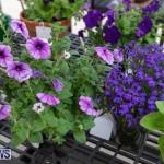 Ag Show Plants Bermuda, April 10 2019-9381