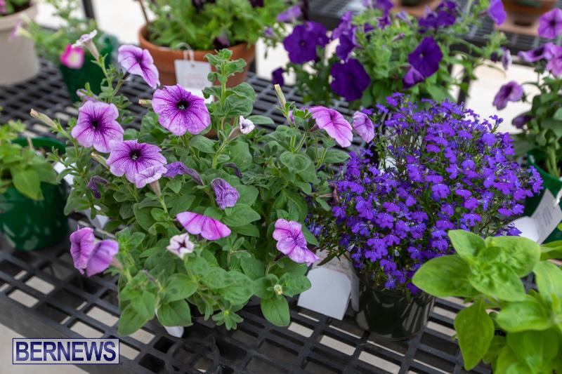 Ag-Show-Plants-Bermuda-April-10-2019-9381