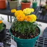Ag Show Plants Bermuda, April 10 2019-9383