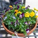 Ag Show Plants Bermuda, April 10 2019-9384
