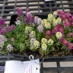 Ag Show Plants Bermuda, April 10 2019-9423