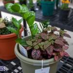 Ag Show Plants Bermuda, April 10 2019-9426