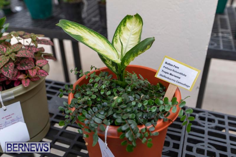 Ag-Show-Plants-Bermuda-April-10-2019-9428