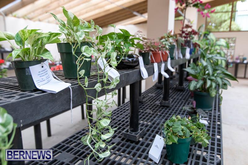 Ag-Show-Plants-Bermuda-April-10-2019-9438