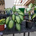 Ag Show Plants Bermuda, April 10 2019-9440