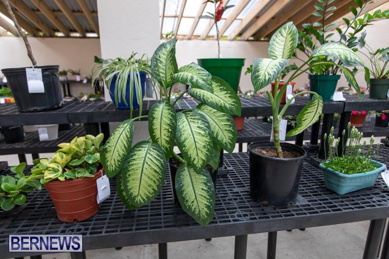 Ag-Show-Plants-Bermuda-April-10-2019-9440