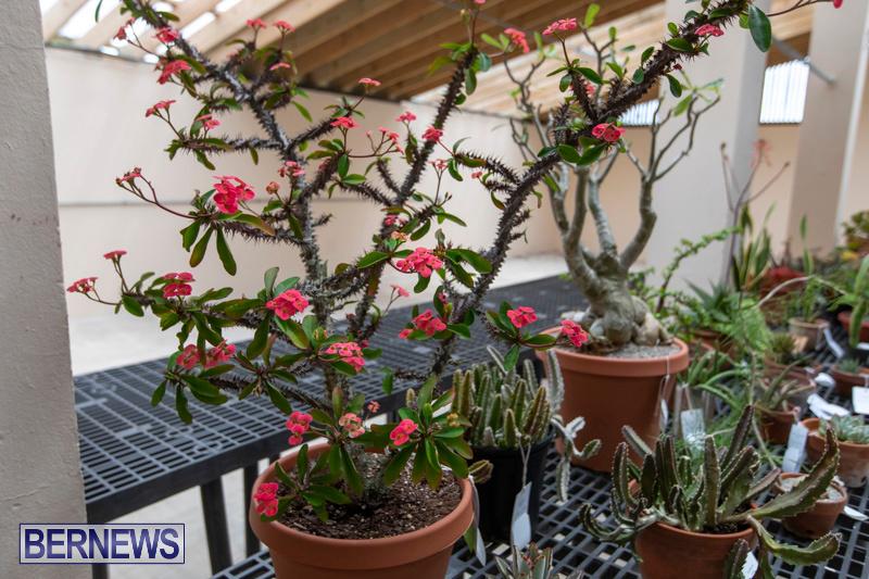 Ag-Show-Plants-Bermuda-April-10-2019-9456