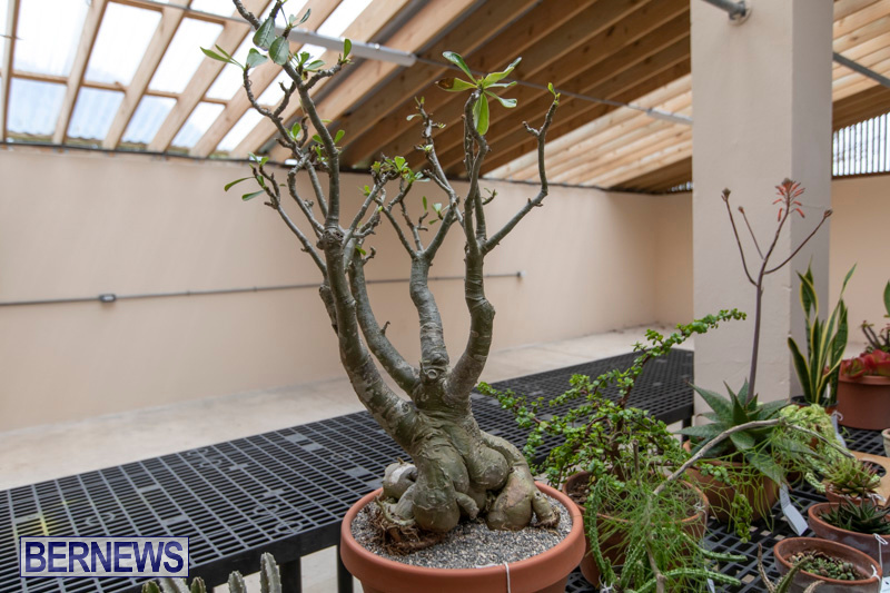 Ag-Show-Plants-Bermuda-April-10-2019-9462
