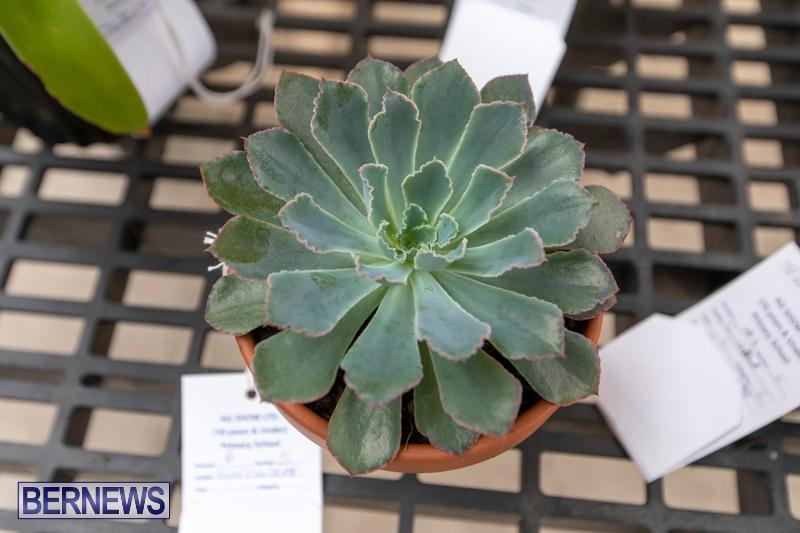Ag-Show-Plants-Bermuda-April-10-2019-9504