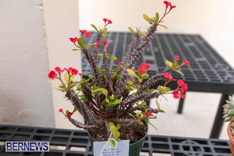 Ag-Show-Plants-Bermuda-April-10-2019-9508