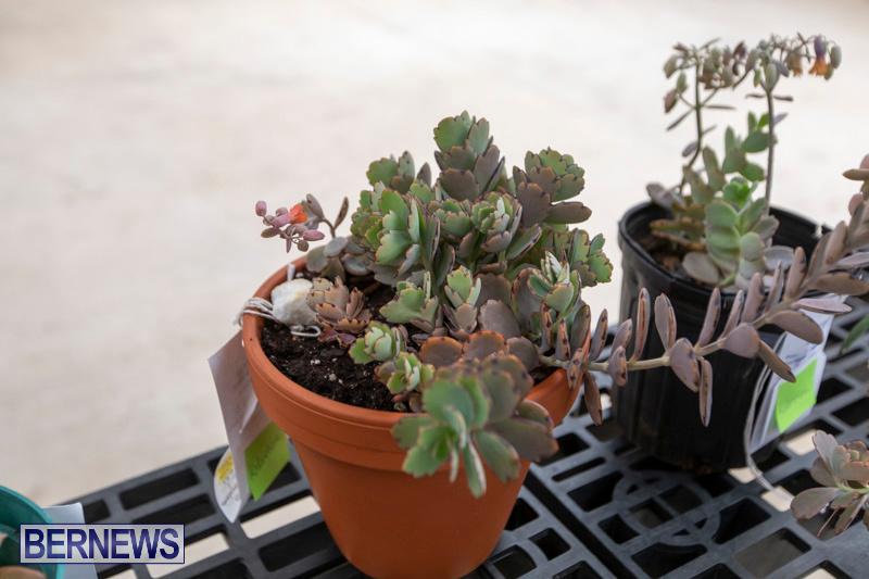 Ag-Show-Plants-Bermuda-April-10-2019-9510