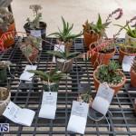 Ag Show Plants Bermuda, April 10 2019-9521