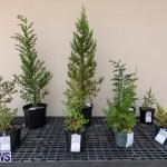 Ag Show Plants Bermuda, April 10 2019-9522