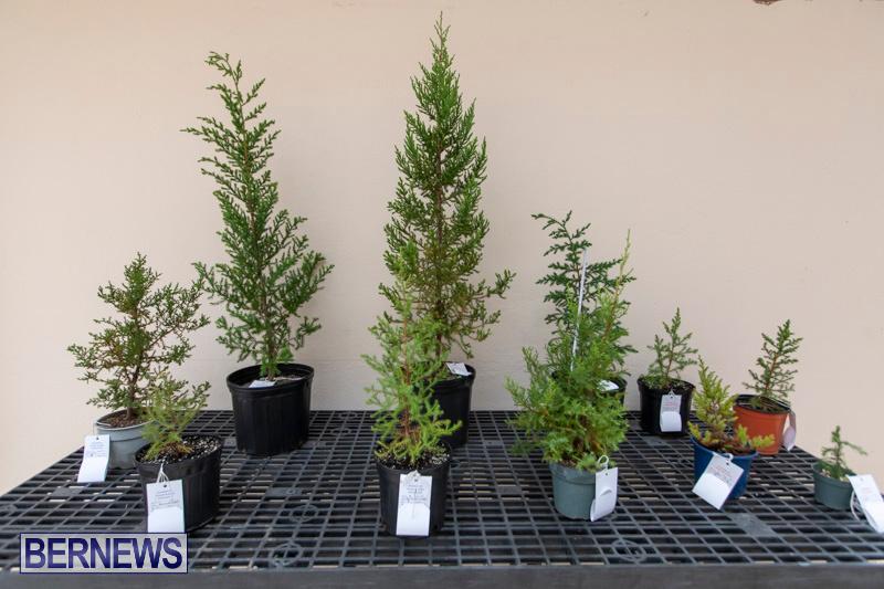 Ag-Show-Plants-Bermuda-April-10-2019-9522