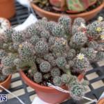 Ag Show Plants Bermuda, April 10 2019-9526