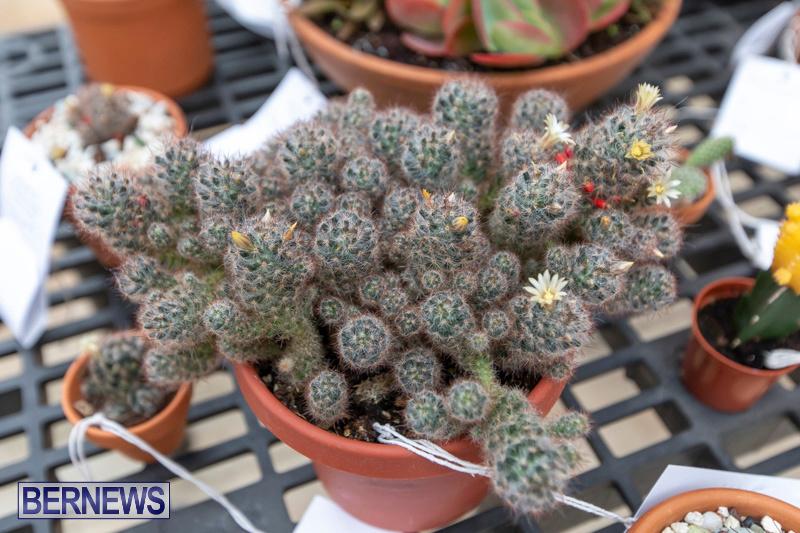 Ag-Show-Plants-Bermuda-April-10-2019-9526