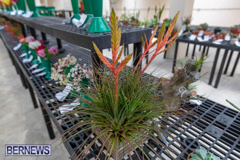 Ag-Show-Plants-Bermuda-April-10-2019-9538