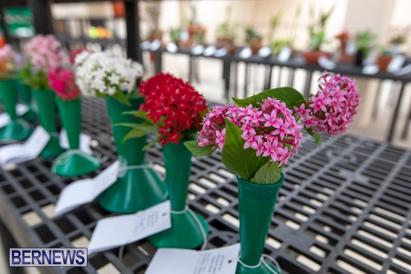 Ag-Show-Plants-Bermuda-April-10-2019-9539