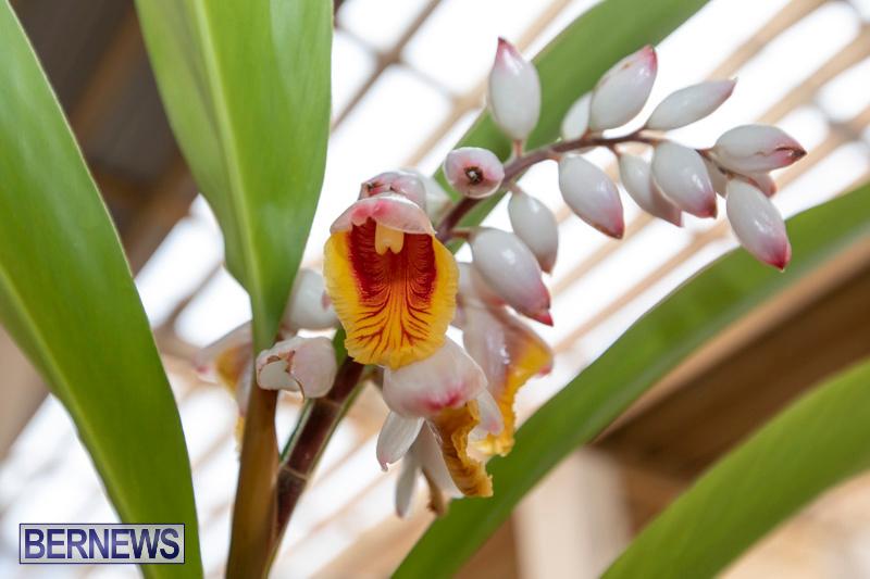Ag-Show-Plants-Bermuda-April-10-2019-9549